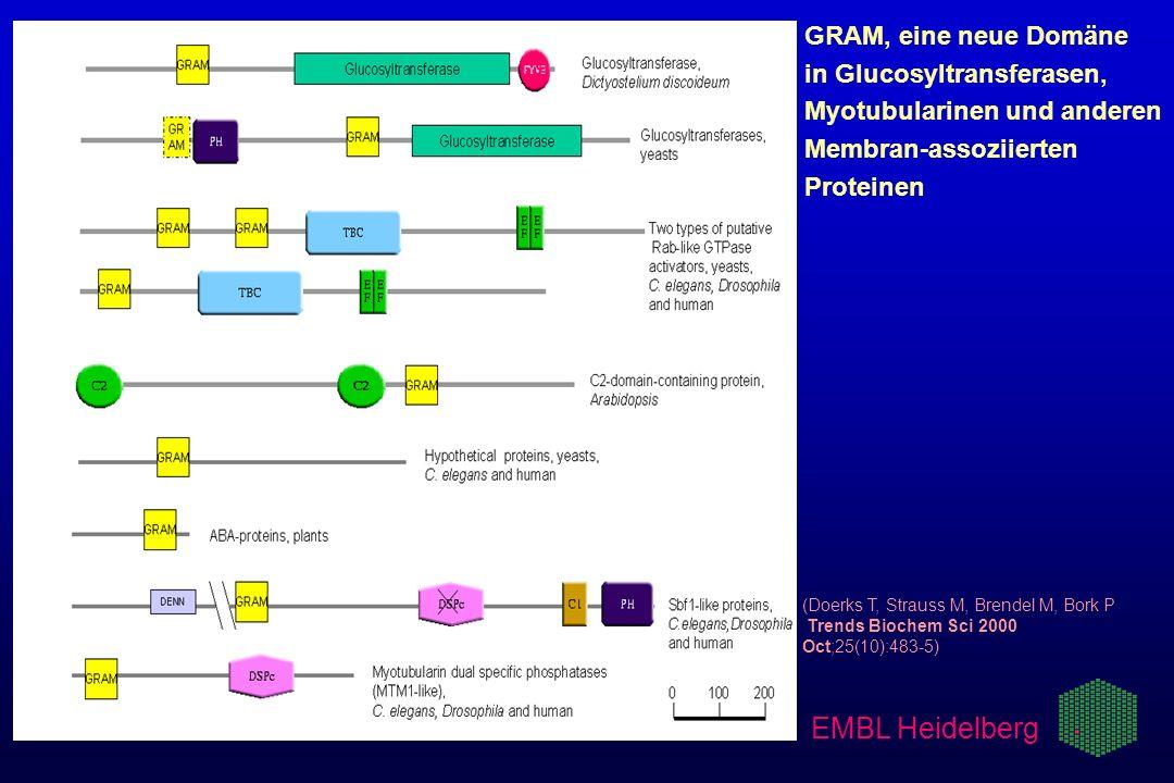 (Doerks T, Strauss M, Brendel M, Bork P Trends Biochem Sci 2000 Oct;25(10):483-5) GRAM, eine neue Domäne in Glucosyltransferasen, Myotubularinen und a