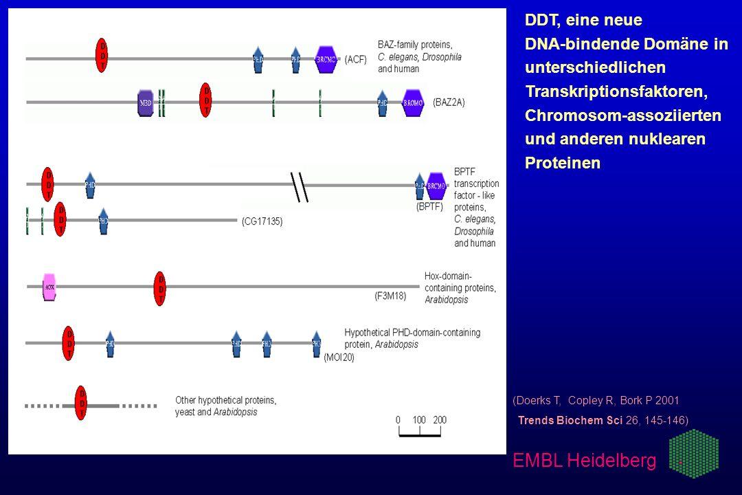 (Doerks T, Copley R, Bork P 2001 Trends Biochem Sci 26, 145-146) DDT, eine neue DNA-bindende Domäne in unterschiedlichen Transkriptionsfaktoren, Chrom