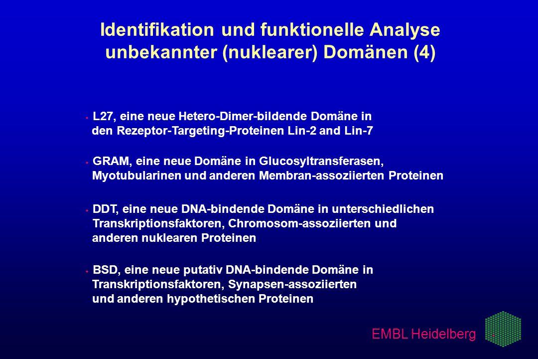 w w L27, eine neue Hetero-Dimer-bildende Domäne in. den Rezeptor-Targeting-Proteinen Lin-2 and Lin-7 Identifikation und funktionelle Analyse unbekannt