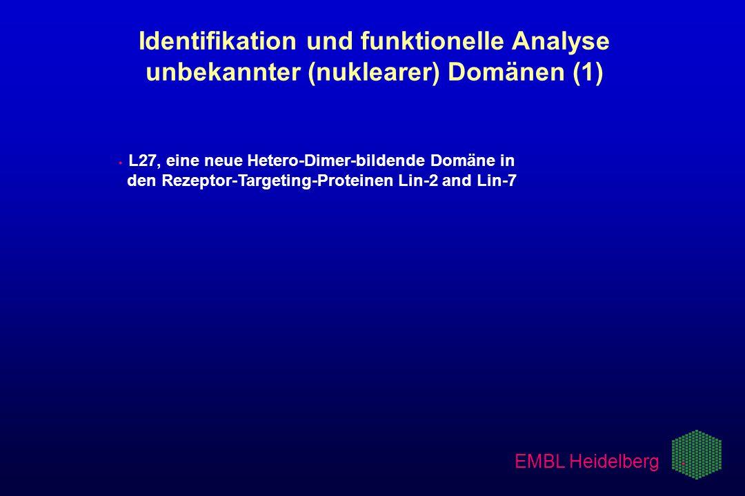 EMBL Heidelberg w w L27, eine neue Hetero-Dimer-bildende Domäne in. den Rezeptor-Targeting-Proteinen Lin-2 and Lin-7 Identifikation und funktionelle A