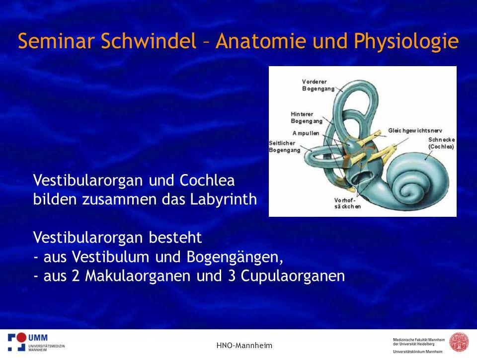 HNO-Mannheim Seminar Schwindel – Anatomie und Physiologie Vestibularorgan und Cochlea bilden zusammen das Labyrinth Vestibularorgan besteht - aus Vest