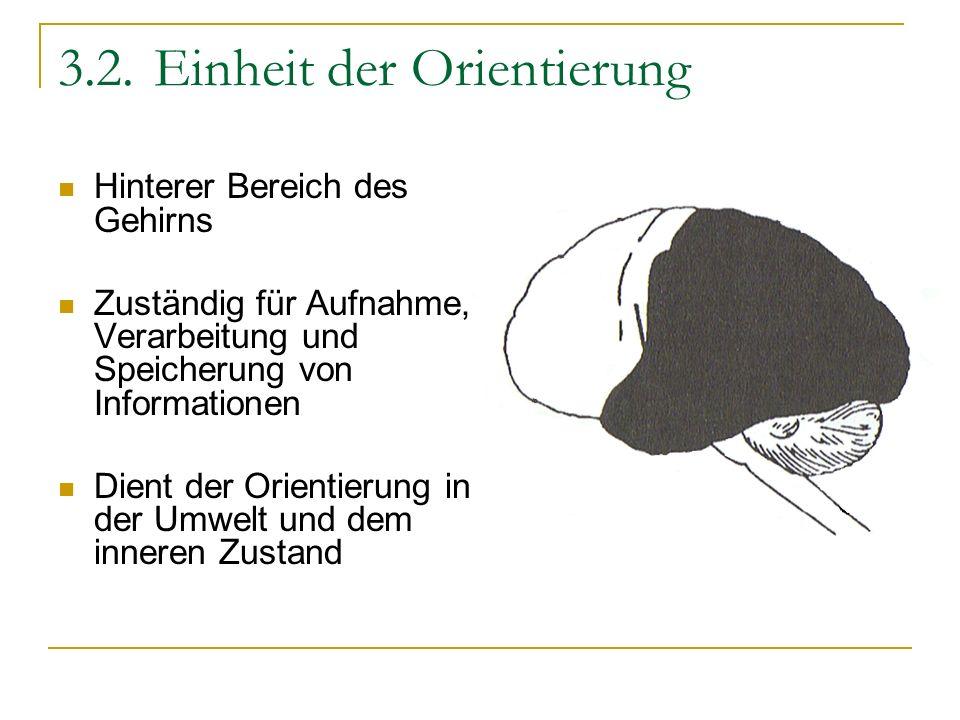 3.2.Einheit der Orientierung Hinterer Bereich des Gehirns Zuständig für Aufnahme, Verarbeitung und Speicherung von Informationen Dient der Orientierun