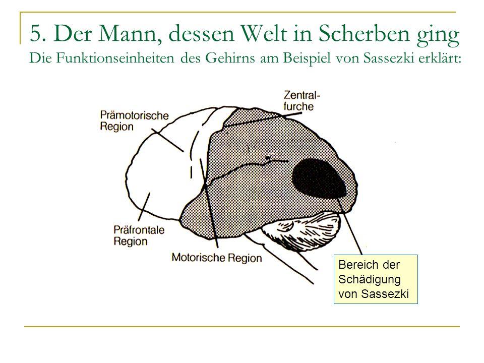 5. Der Mann, dessen Welt in Scherben ging Die Funktionseinheiten des Gehirns am Beispiel von Sassezki erklärt: Bereich der Schädigung von Sassezki