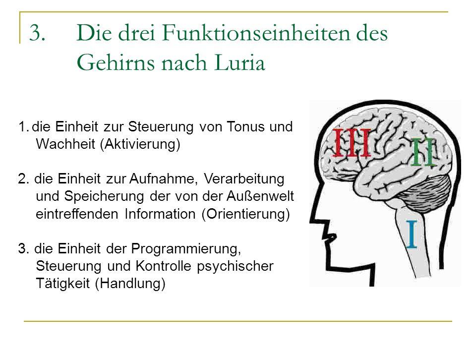 3.Die drei Funktionseinheiten des Gehirns nach Luria 1.die Einheit zur Steuerung von Tonus und Wachheit (Aktivierung) 2. die Einheit zur Aufnahme, Ver