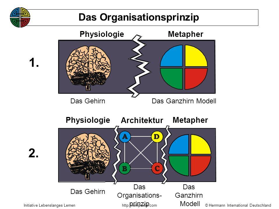 © Herrmann International Deutschland Initiative Lebenslanges Lernenhttp://lernportal.com Die Dominanz einzelner Gehirnstrukturen ist die Ursache von D