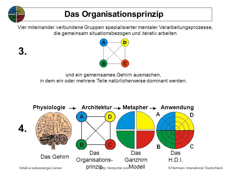 © Herrmann International Deutschland Initiative Lebenslanges Lernenhttp://lernportal.com Das Organisationsprinzip PhysiologieMetapher Das GehirnDas Ga