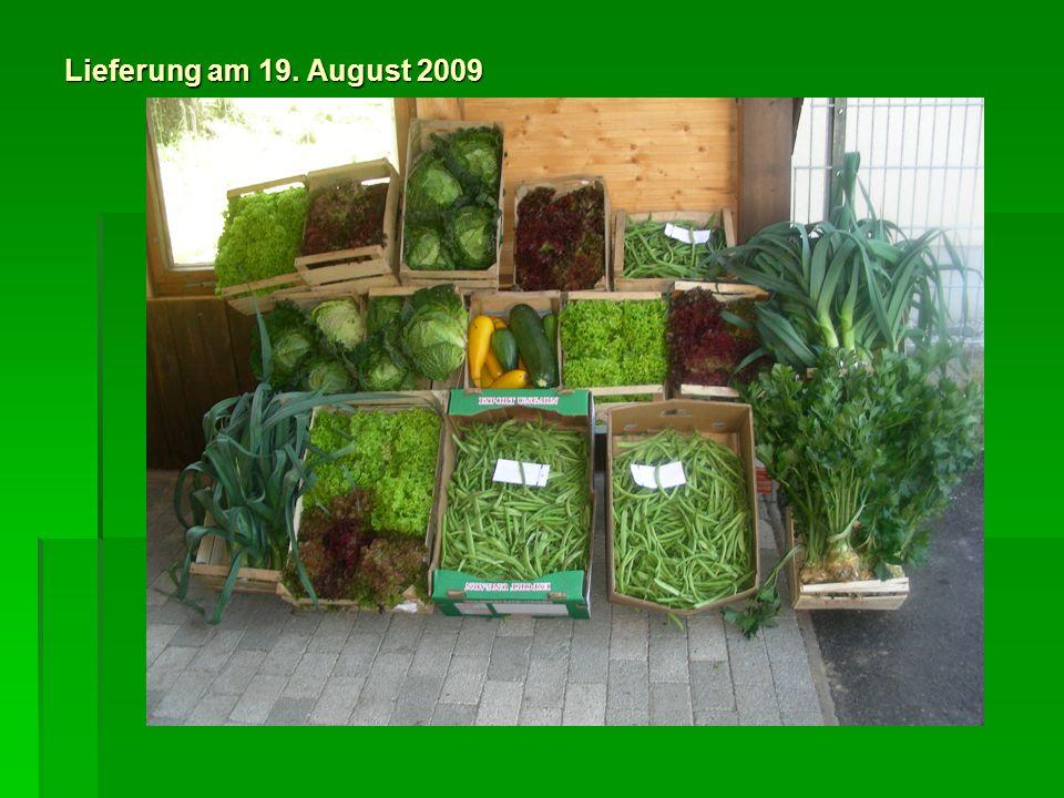 Gesamtlieferung an die Tafel 464 Stck.Salatköpfe 464 Stck.