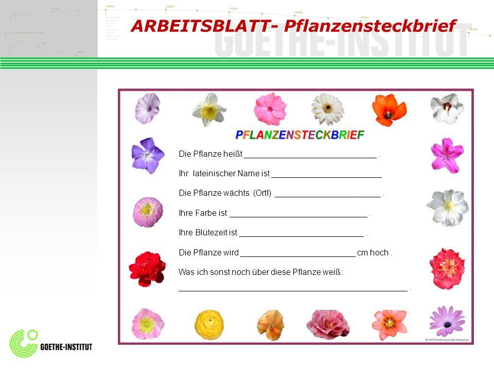 ARBEITSBLATT- Pflanzensteckbrief Die Pflanze heißt _____________________________. Ihr lateinischer Name ist ________________________ Die Pflanze wächt