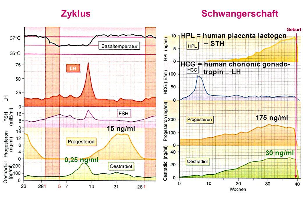 ZyklusSchwangerschaft 15 ng/ml 175 ng/ml 0,25 ng/ml 30 ng/ml HPL = human placenta lactogen STH HCG = human chorionic gonado- tropin LH