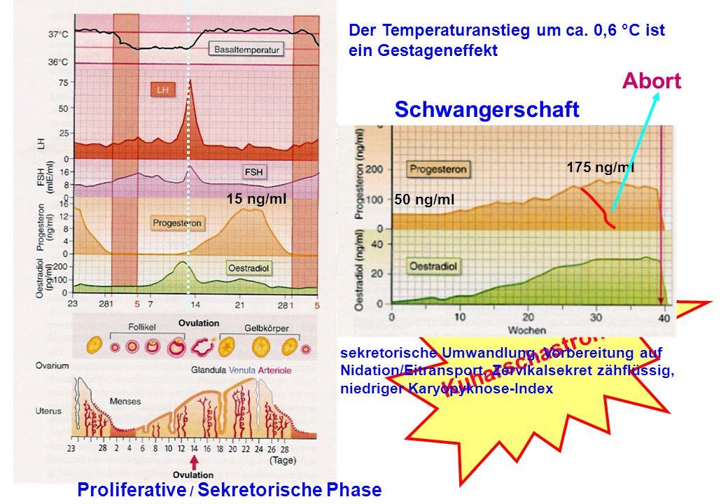 Proliferative / Sekretorische Phase Der Temperaturanstieg um ca. 0,6 °C ist ein Gestageneffekt 15 ng/ml Kuharschastronom sekretorische Umwandlung, Vor
