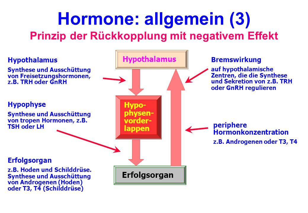 Hormone: allgemein (3) Prinzip der Rückkopplung mit negativem Effekt Erfolgsorgan Hypo- physen- vorder- lappen Hypothalamus Synthese und Ausschüttung