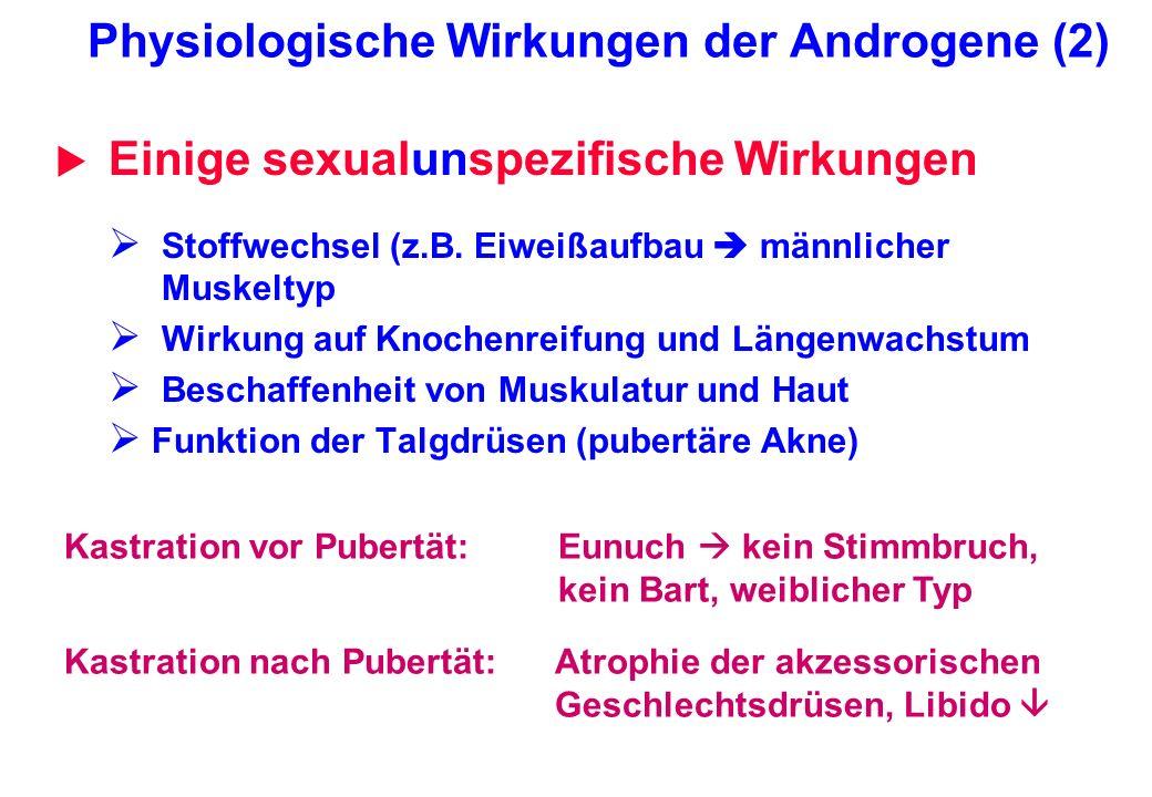 Physiologische Wirkungen der Androgene (2) Einige sexualunspezifische Wirkungen Stoffwechsel (z.B. Eiweißaufbau männlicher Muskeltyp Wirkung auf Knoch