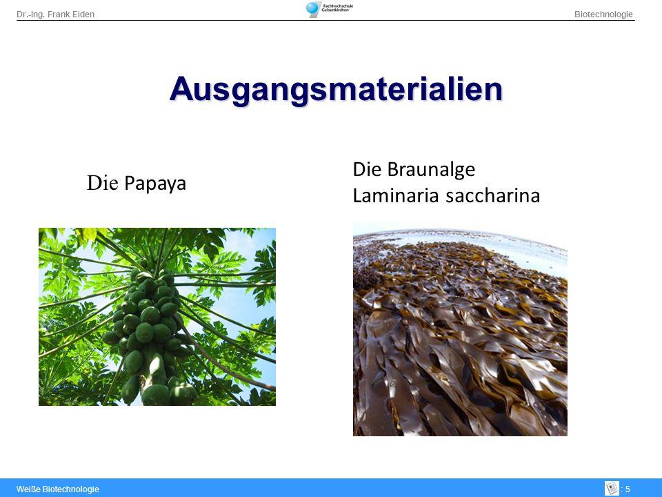 Dr.-Ing. Frank Eiden Biotechnologie Weiße Biotechnologie: 5 Ausgangsmaterialien Die Papaya Die Braunalge Laminaria saccharina