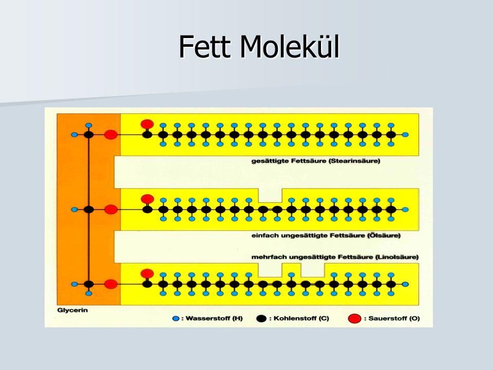 Fett Molekül