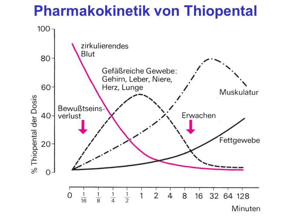 Pharmakokinetik von Thiopental