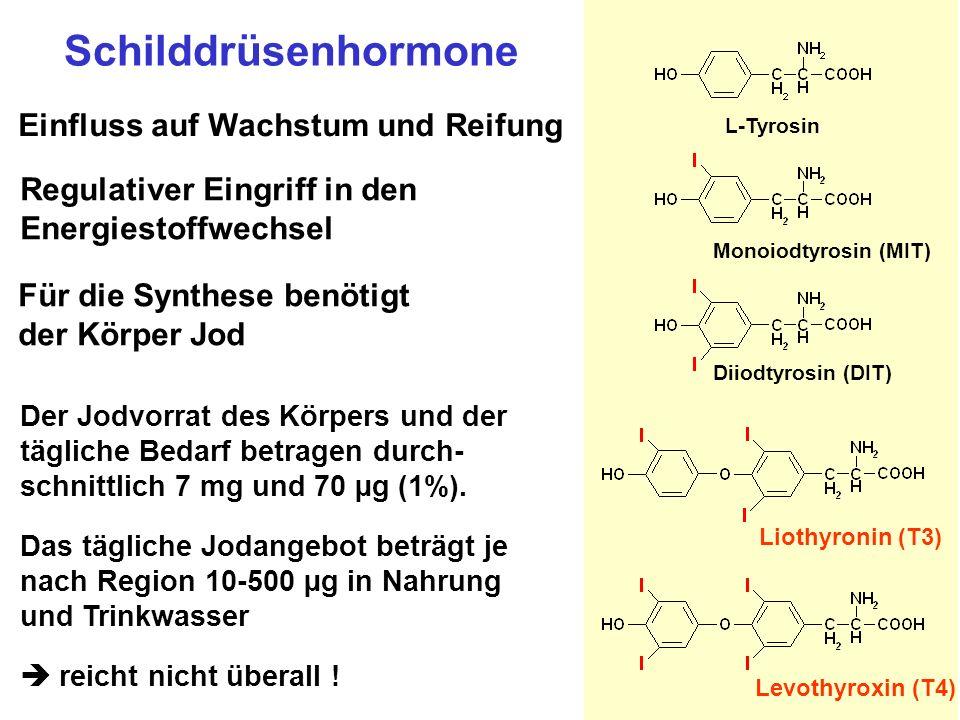 Biosynthese der Schilddrüsenhormone TG = Thyreoglobulin Kolloid Follikelzelle Blut basale Membran apikale Membran I I-I- TG MITMIT MITMIT DITDIT MITMIT DITDIT T3 T4 TG MITMIT DITDIT T3 T4 TG MITMIT DITDIT T3 T4 TG MITMIT DITDIT T3 T3 : T4 1 : 10 MIT, DIT T3, T4 T3 T4 Deiodase Protein- synthese + I - Peroxidase