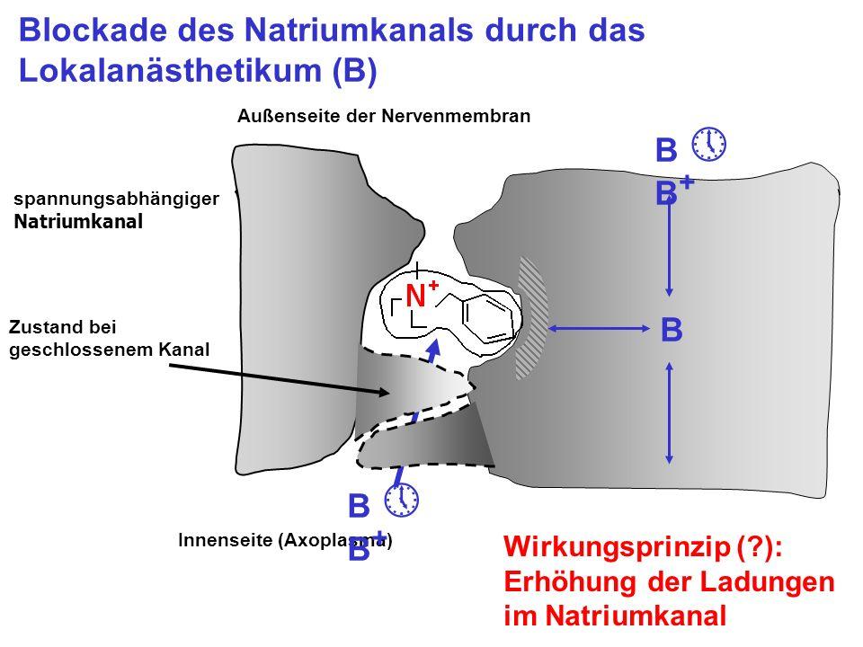 Blockade des Natriumkanals durch das Lokalanästhetikum (B) B B + B Außenseite der Nervenmembran Innenseite (Axoplasma) Wirkungsprinzip (?): Erhöhung d
