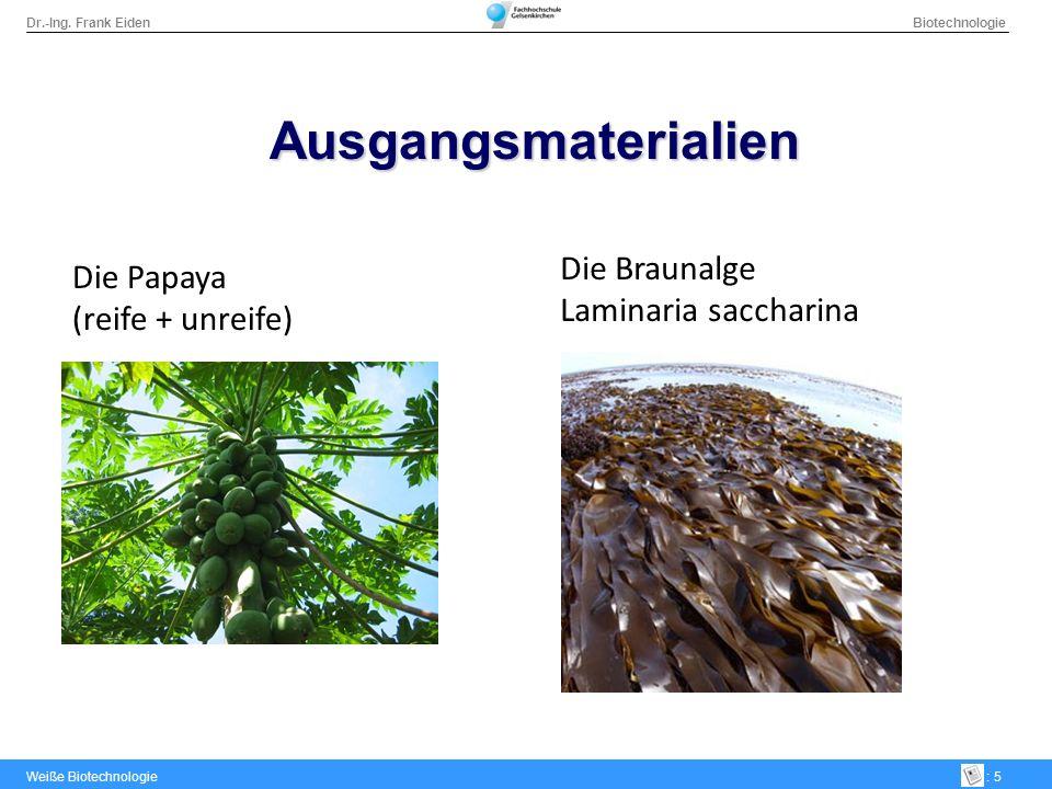 Dr.-Ing. Frank Eiden Biotechnologie Weiße Biotechnologie: 5 Ausgangsmaterialien Die Papaya (reife + unreife) Die Braunalge Laminaria saccharina