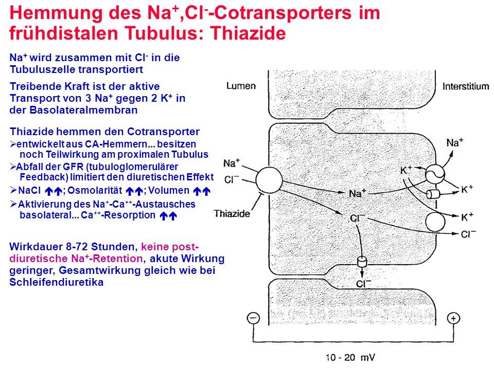 Hemmung des Na +,Cl - -Cotransporters im frühdistalen Tubulus: Thiazide Na + wird zusammen mit Cl - in die Tubuluszelle transportiert Treibende Kraft