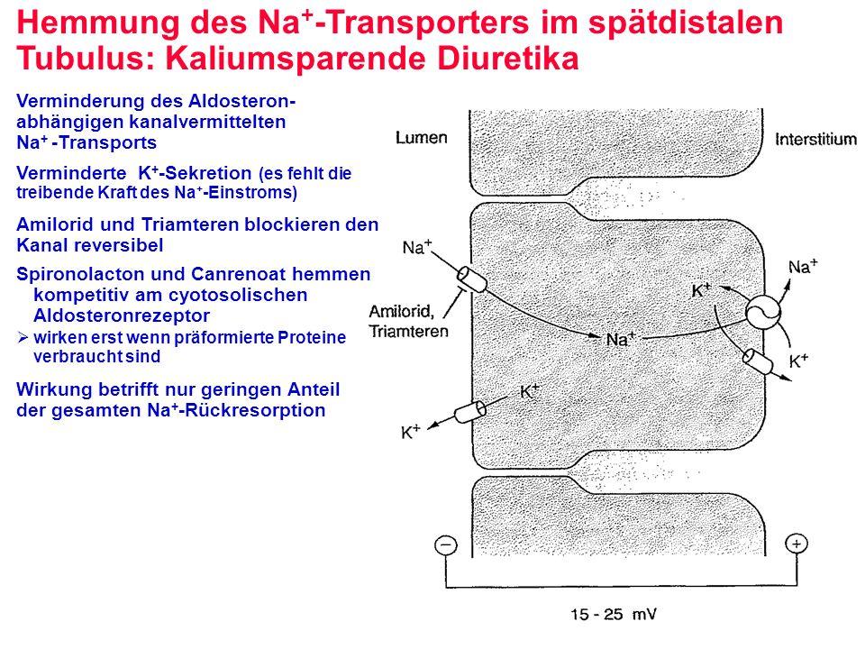 Hemmung des Na + -Transporters im spätdistalen Tubulus: Kaliumsparende Diuretika Verminderung des Aldosteron- abhängigen kanalvermittelten Na + -Trans