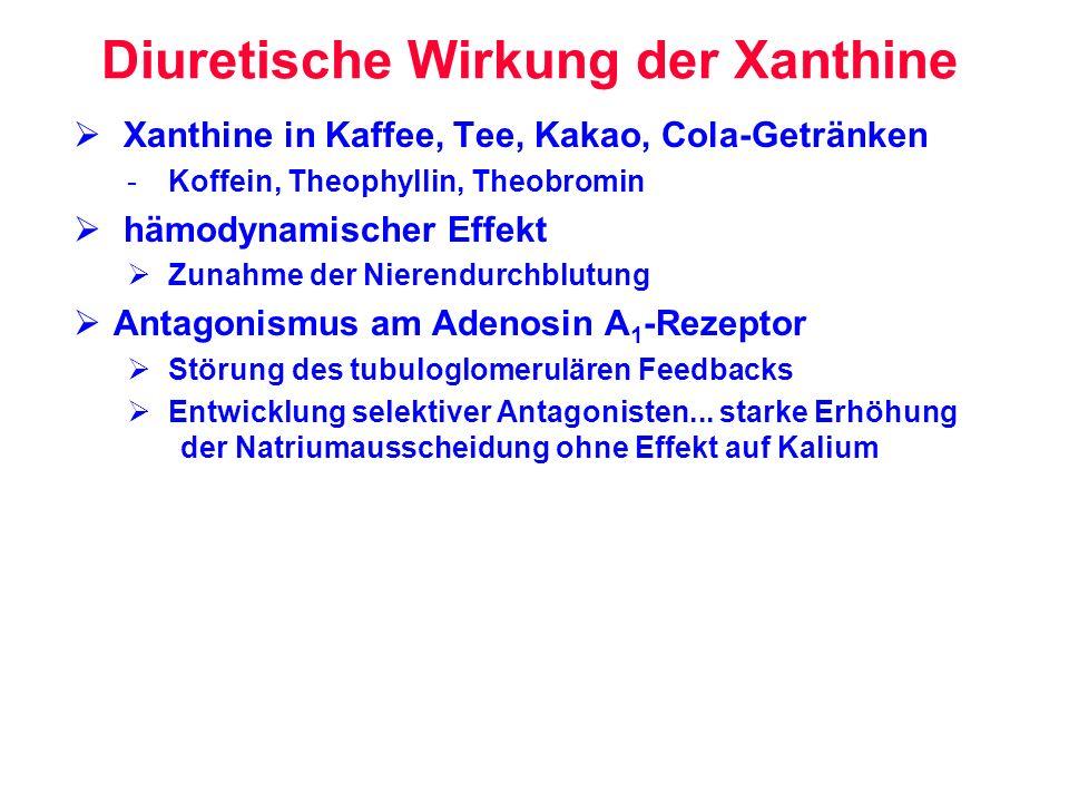 Diuretische Wirkung der Xanthine Xanthine in Kaffee, Tee, Kakao, Cola-Getränken - Koffein, Theophyllin, Theobromin hämodynamischer Effekt Zunahme der
