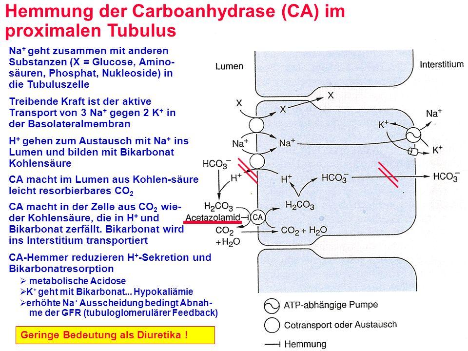 Hemmung des Na + -Transporters im spätdistalen Tubulus: Kaliumsparende Diuretika Verminderung des Aldosteron- abhängigen kanalvermittelten Na + -Transports Verminderte K + -Sekretion (es fehlt die treibende Kraft des Na + -Einstroms) Amilorid und Triamteren blockieren den Kanal reversibel Wirkung betrifft nur geringen Anteil der gesamten Na + -Rückresorption Häufig in Kombination mit anderen Diuretika: Wirkungsverstärkung und kaliumsparender Effekt .