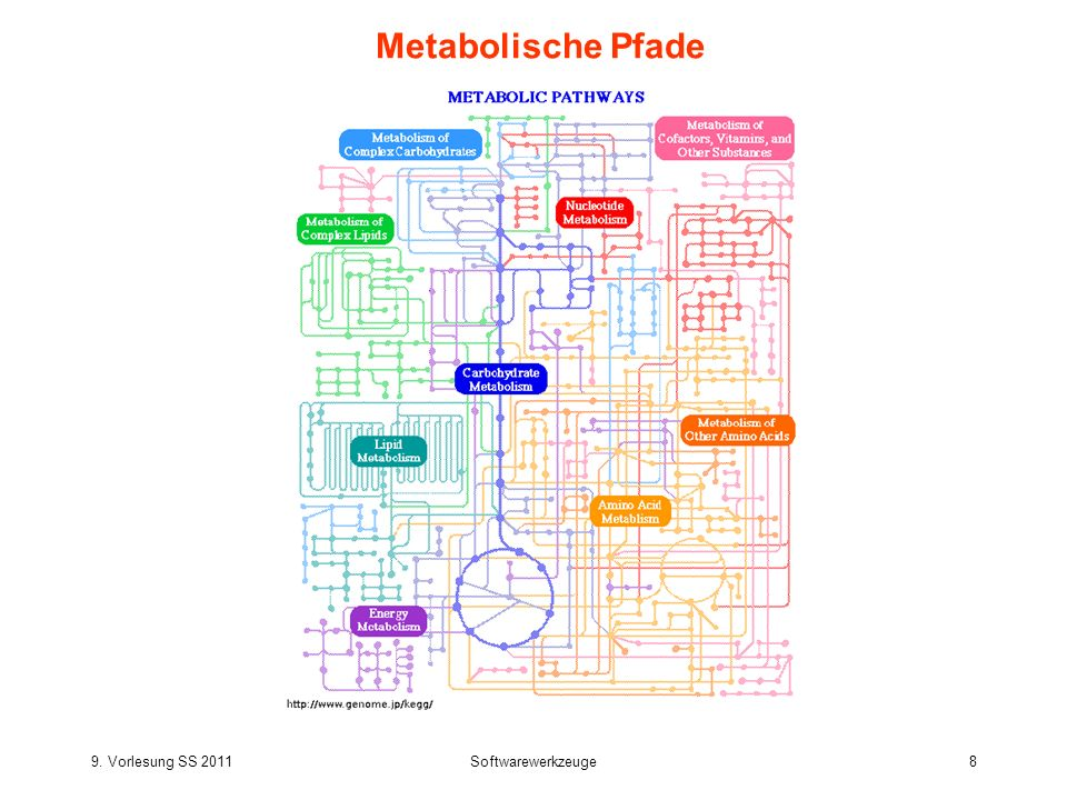 9. Vorlesung SS 2011Softwarewerkzeuge8 Metabolische Pfade