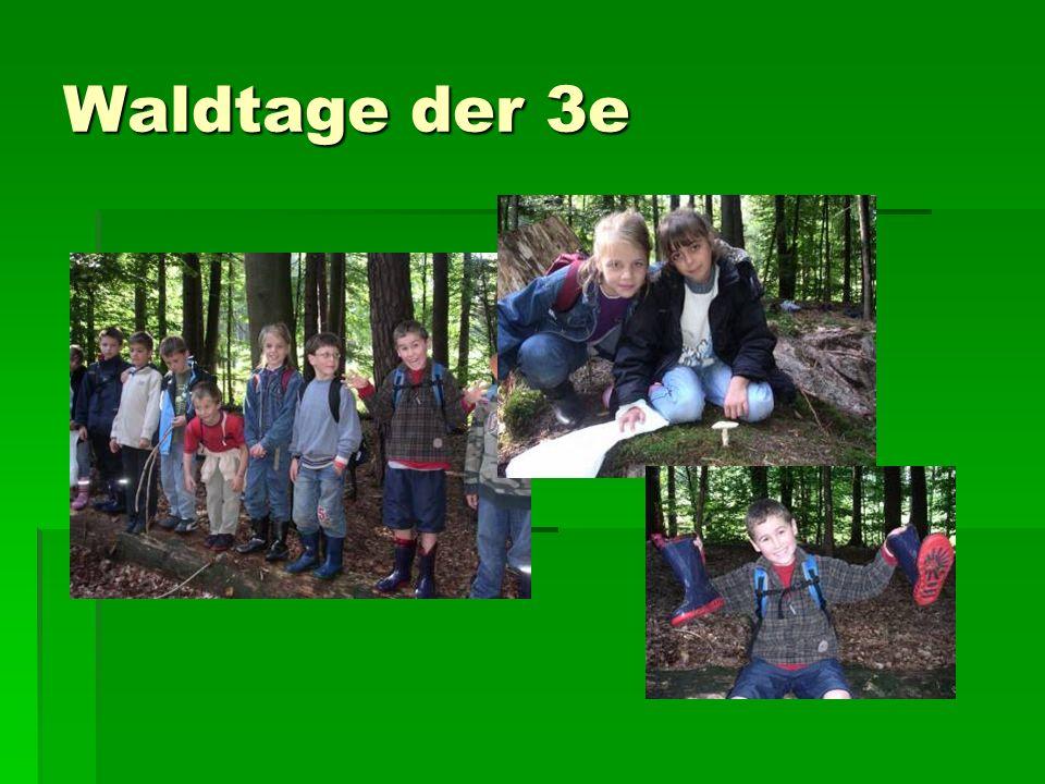 Waldtage der 3e