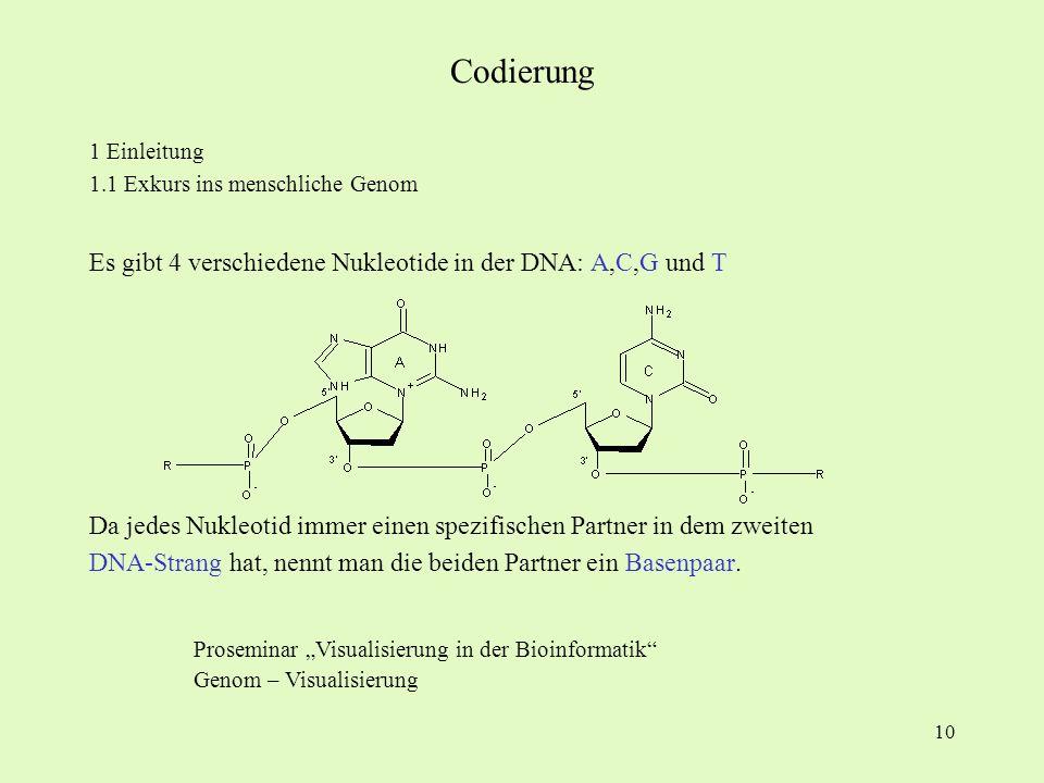 10 1 Einleitung 1.1 Exkurs ins menschliche Genom Es gibt 4 verschiedene Nukleotide in der DNA: A,C,G und T Da jedes Nukleotid immer einen spezifischen