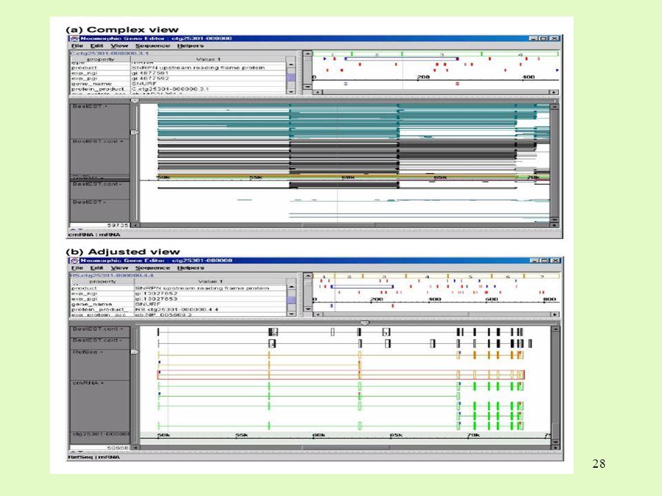 29 3 ProtAnnot und Neomorphic GeneViewer 3.6 Proteinvorhersage ARG1 (Arginase – Gen) Proseminar Visualisierung in der Bioinformatik Genom – Visualisierung Das alternative Splicing (oder Spleissen)