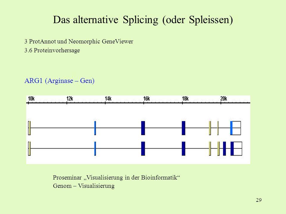 29 3 ProtAnnot und Neomorphic GeneViewer 3.6 Proteinvorhersage ARG1 (Arginase – Gen) Proseminar Visualisierung in der Bioinformatik Genom – Visualisie
