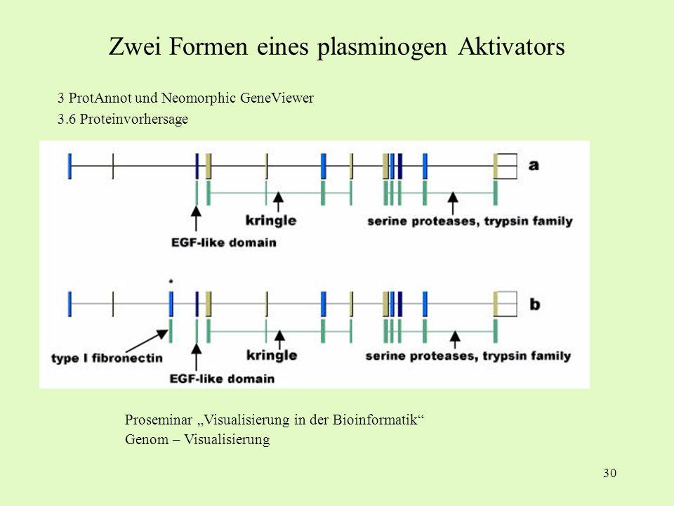 30 3 ProtAnnot und Neomorphic GeneViewer 3.6 Proteinvorhersage Proseminar Visualisierung in der Bioinformatik Genom – Visualisierung Zwei Formen eines