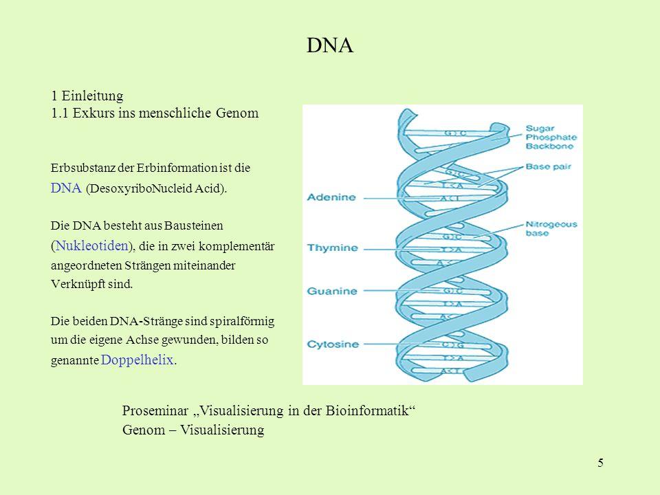 5 1 Einleitung 1.1 Exkurs ins menschliche Genom Erbsubstanz der Erbinformation ist die DNA (DesoxyriboNucleid Acid). Die DNA besteht aus Bausteinen (N