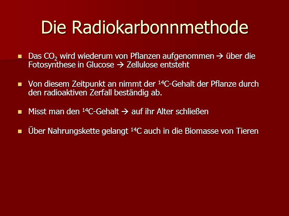 Die Radiokarbonnmethode Das CO 2 wird wiederum von Pflanzen aufgenommen über die Fotosynthese in Glucose Zellulose entsteht Das CO 2 wird wiederum von