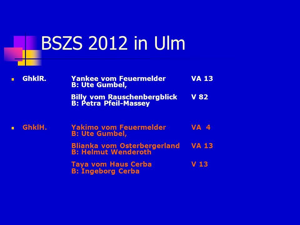 BSZS 2012 in Ulm GhklR. Yankee vom FeuermelderVA 13 B: Ute Gumbel, Billy vom RauschenbergblickV 82 B: Petra Pfeil-Massey GhklH. Yakimo vom Feuermelder