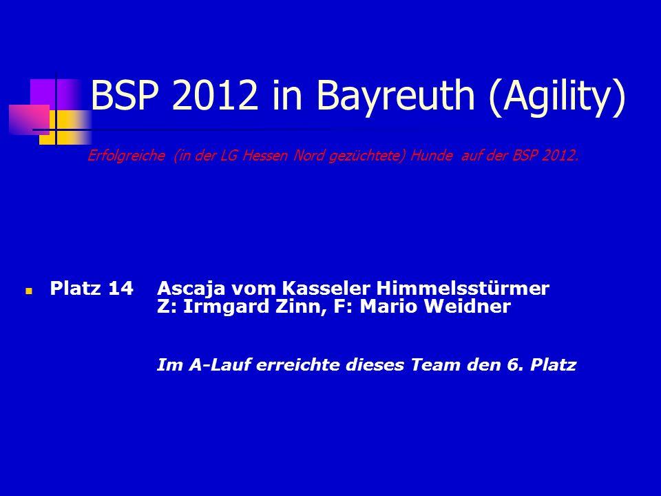 BSP 2012 in Bayreuth (Agility) Erfolgreiche (in der LG Hessen Nord gezüchtete) Hunde auf der BSP 2012. Platz 14 Ascaja vom Kasseler Himmelsstürmer Z: