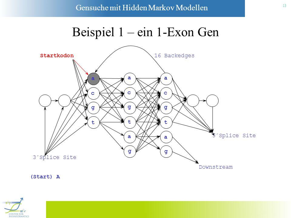 Gensuche mit Hidden Markov Modellen 12 Beispiel 1 – ein 1-Exon Gen Startkodon a c g t a c g t a g a c g t a g 3´Splice Site Downstream 5´Splice Site 1