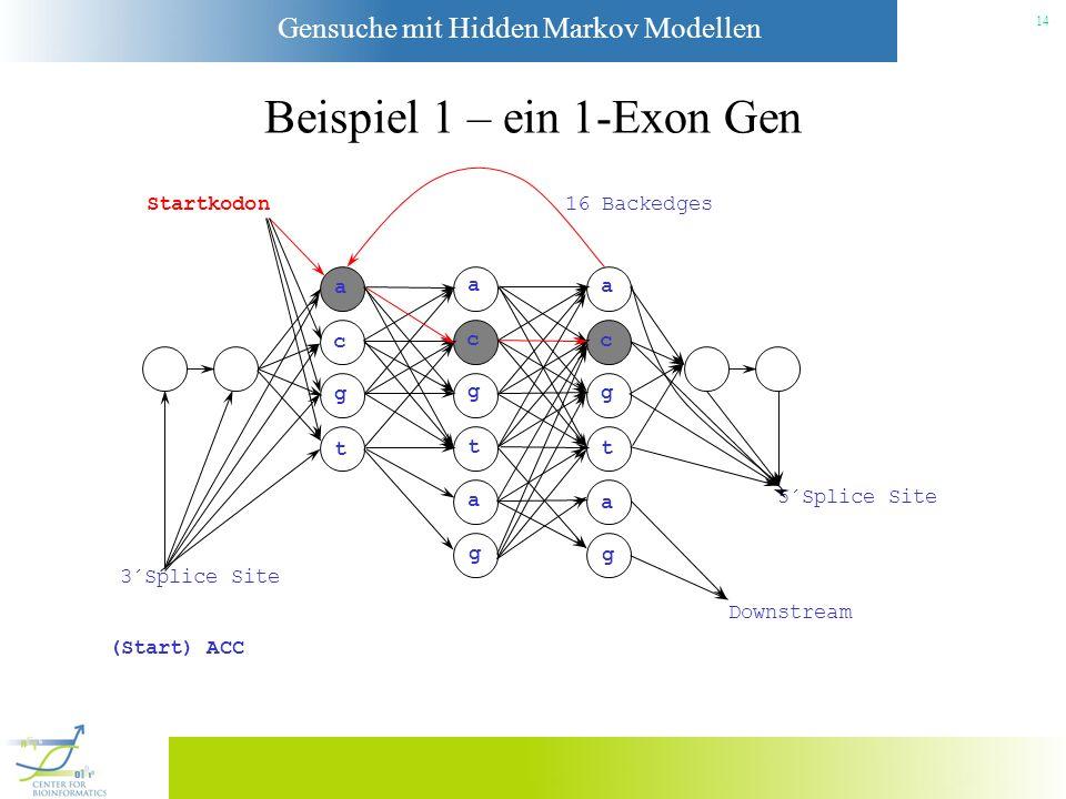 Gensuche mit Hidden Markov Modellen 13 Beispiel 1 – ein 1-Exon Gen Startkodon a c g t a c g t a g a c g t a g 3´Splice Site Downstream 5´Splice Site 1