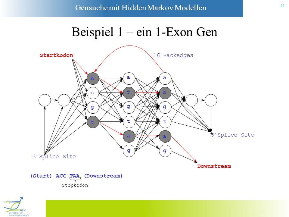Gensuche mit Hidden Markov Modellen 15 Beispiel 1 – ein 1-Exon Gen Startkodon a c g t a c g t a g a c g t a g 3´Splice Site Downstream 5´Splice Site 1