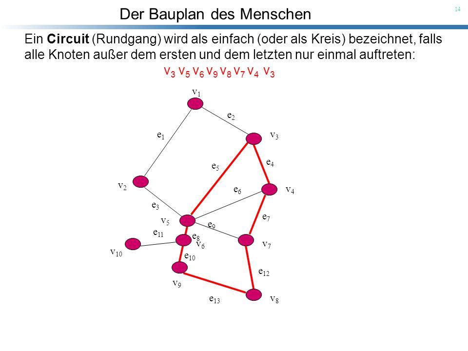 Der Bauplan des Menschen 14 v1v1 v3v3 v2v2 v4v4 v5v5 v6v6 v7v7 v8v8 v9v9 v 10 e 1 e2e2 e 5 e4e4 e7e7 e 6 e 12 e 3 e9e9 e 13 e 10 e8e8 e 11 Ein Circuit