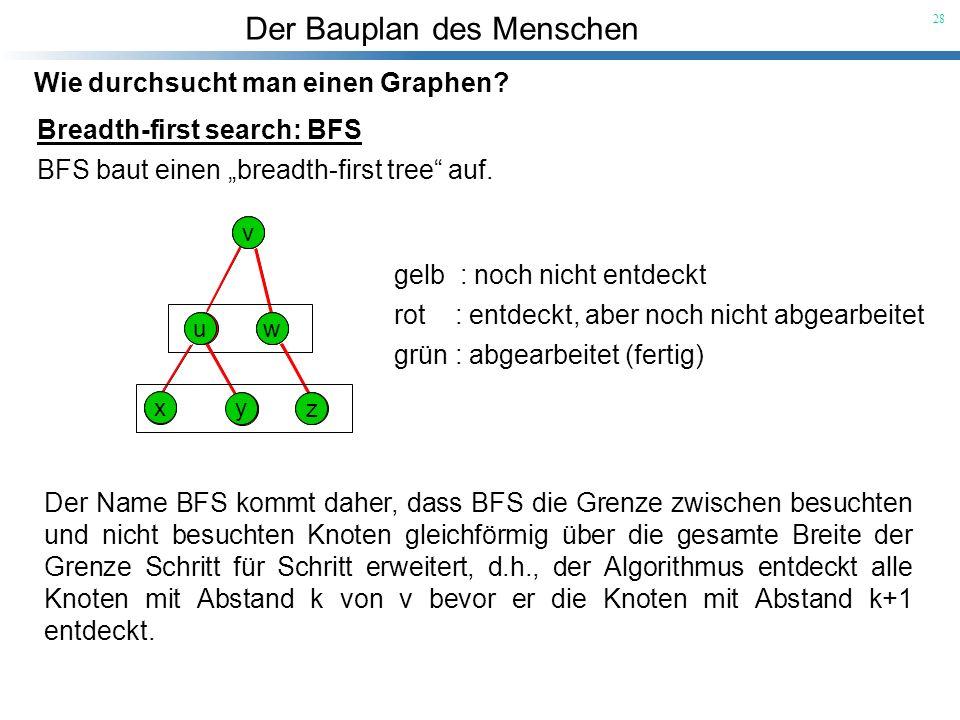 Der Bauplan des Menschen 28 Wie durchsucht man einen Graphen? Breadth-first search: BFS BFS baut einen breadth-first tree auf. Der Name BFS kommt dahe
