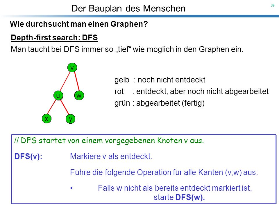 Der Bauplan des Menschen 39 Wie durchsucht man einen Graphen? Depth-first search: DFS Man taucht bei DFS immer so tief wie möglich in den Graphen ein.