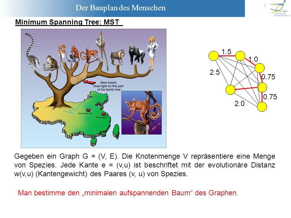 Der Bauplan des Menschen 12 Laufzeit MST-KRUSKAL O(1) O(nlog(n)) O(m log(m)) O(m) O(m*Gleichheitstest) O((n-1)*1) O((n-1) *Vereinige) O(1) Als Laufzeit MST für einen Graphen mit n Knoten und m Kanten erhält man : MST(n,m) = O( m log(m) + m * Gleichheitstest + n * Vereinige) Mittels effizienter Datenstrukturen für die Mengenoperationen (Heaps), kann man die Gleichheitstests und die Vereinige-Operationen in Zeit O(log(n)) durchführen.