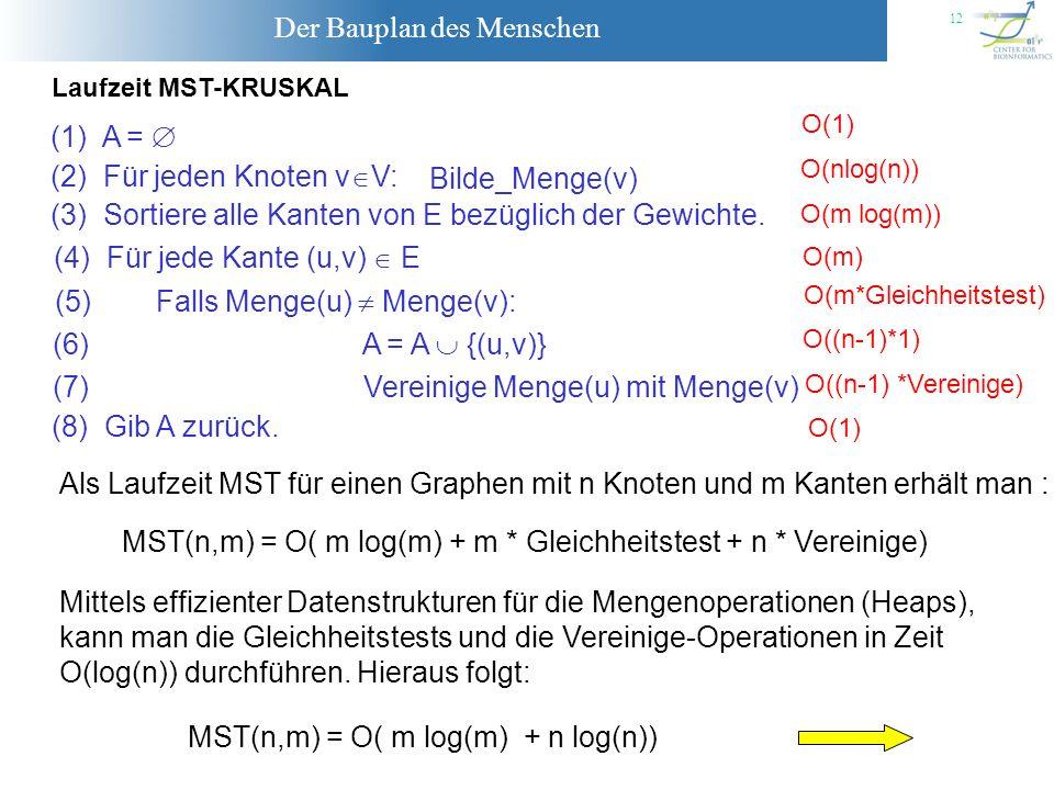 Der Bauplan des Menschen 12 Laufzeit MST-KRUSKAL O(1) O(nlog(n)) O(m log(m)) O(m) O(m*Gleichheitstest) O((n-1)*1) O((n-1) *Vereinige) O(1) Als Laufzei