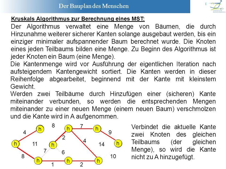 Der Bauplan des Menschen 9 MST-KRUSKAL(G,w): (1) A = (2) Für jeden Knoten v V: (5) Falls Menge(u) Menge(v): (3) Sortiere alle Kanten von E bezüglich der Gewichte.