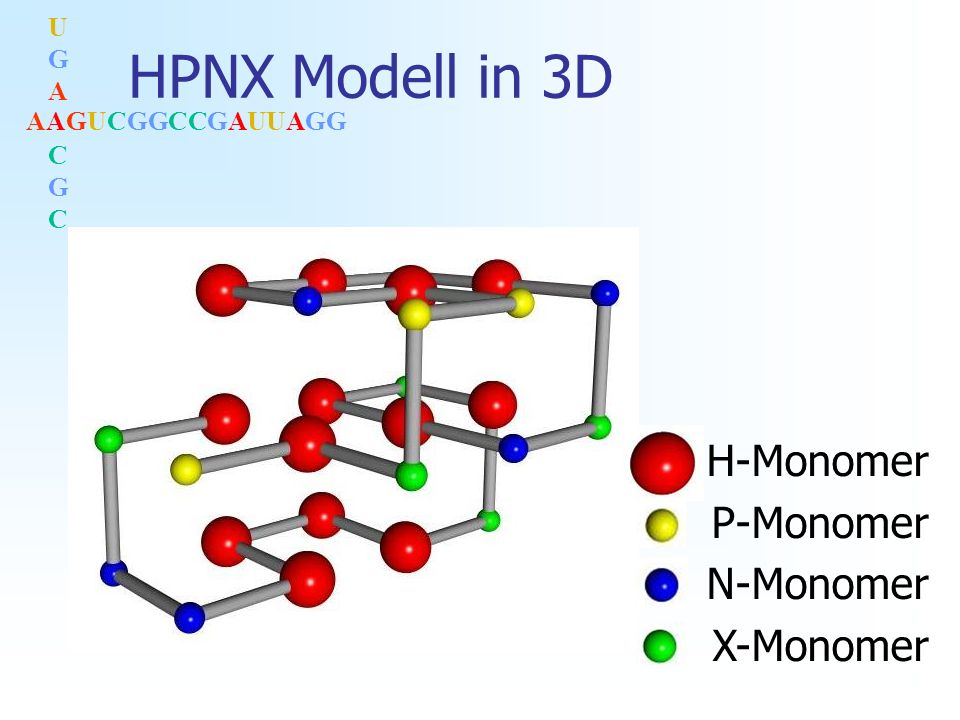 AAGUCGGCCGAUUAGG UGACGCUGACGC HPNX Modell in 3D H-Monomer P-Monomer N-Monomer X-Monomer