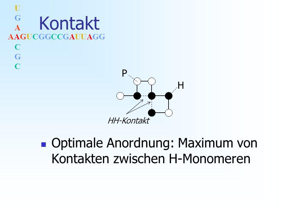 AAGUCGGCCGAUUAGG UGACGCUGACGC Kontakt Optimale Anordnung: Maximum von Kontakten zwischen H-Monomeren HH-Kontakt P H