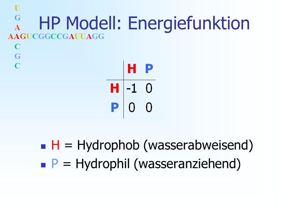 AAGUCGGCCGAUUAGG UGACGCUGACGC HP Modell in 3D H-Monomer P-Monomer
