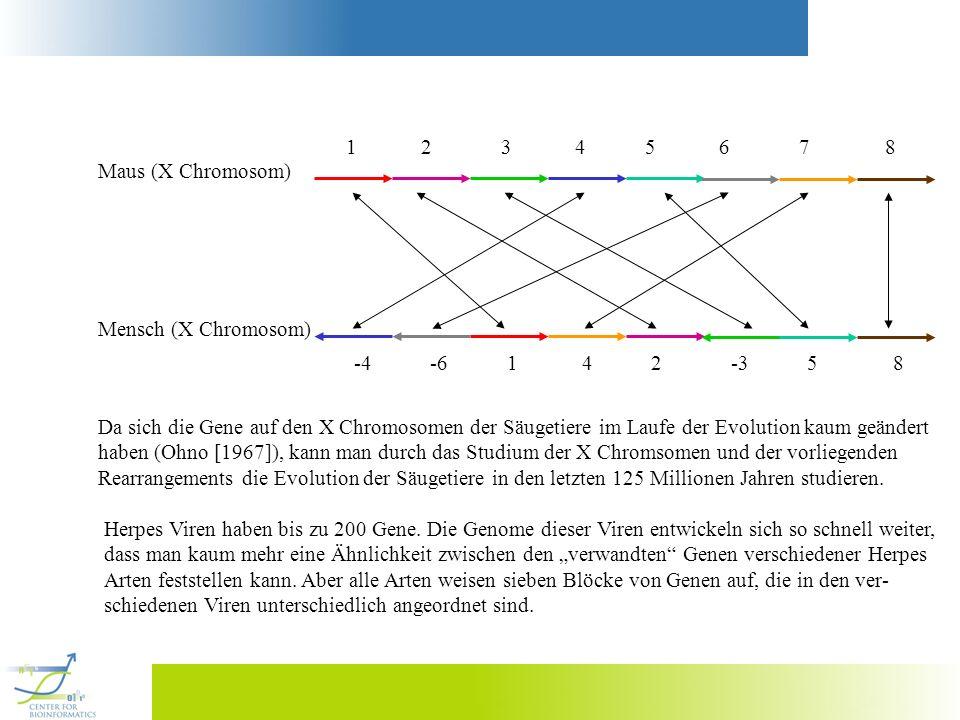 1 2 3 4 5 6 7 8 Maus (X Chromosom) -4 -6 1 4 2 -3 5 8 Mensch (X Chromosom) Da sich die Gene auf den X Chromosomen der Säugetiere im Laufe der Evolutio