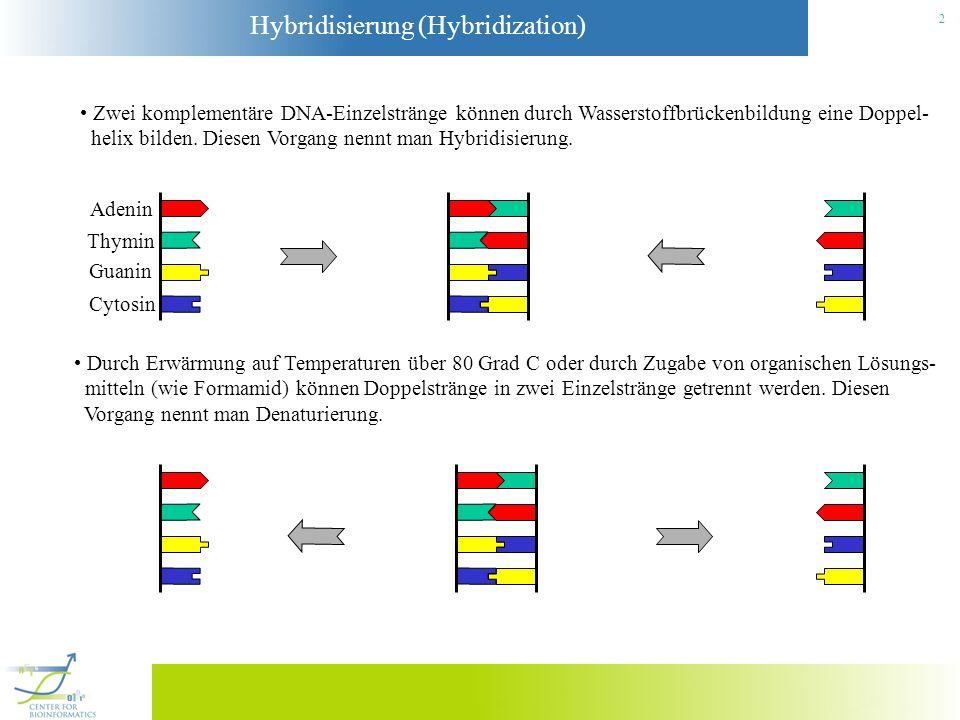 Hybridisierung (Hybridization) 3 Bestimmte DNA-Muster in Chromosomen oder mRNA kann man wie folgt nachweisen: (1) Wohldefinierte DNA-Moleküle (Folgen von Basen) werden mit einer Oberfläche verlinkt: (2) Die zu untersuchenden DNA-Moleküle werden mit einem Fluoreszenzfarbstoff markiert, der durch eine geeignete Lichtquelle zur Fluoreszenz angeregt wird.